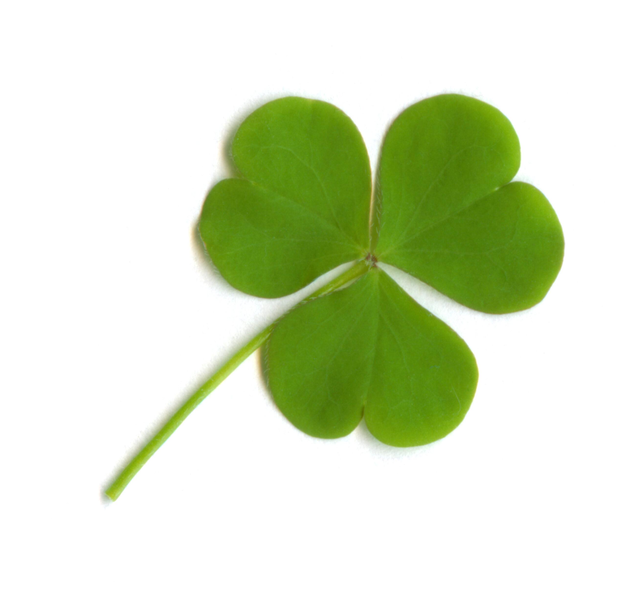 Should Christians Celebrate St. Patrick's Day?
