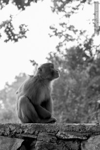 monkey sitting looking up