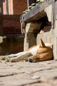 dog sleeping sun
