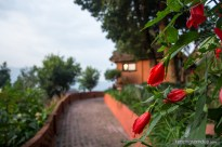 flowers-of-dhulikhel-mountain-resort-2