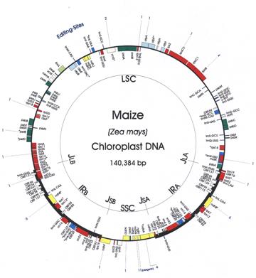 Macromolecular Networks Underlying Chloroplast Biogenesis