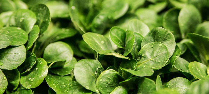 4 Super Greens to Grow in Your Spring or Fall Garden