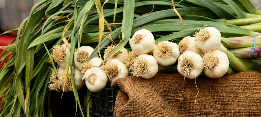 Fall Gardening: How to Grow Garlic