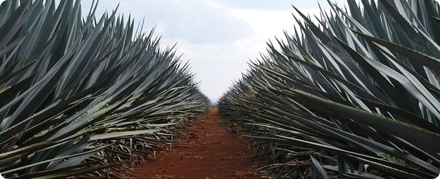 The Rules of Agave with Germán González