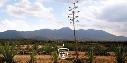 Artisanal Mezcal in Oaxaca 25 Years Hence: No Two Batches are Different http://wp.me/p3u1xi-4XO