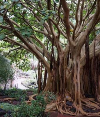 jenis pohon