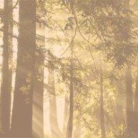 Redwoods: como as árvores mais altas que existem nos ensinam que crescer é para sempre