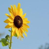 Curso: A Aplicação Profunda da Terapia Floral e os Florais da Califórnia - Módulo I