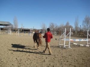El caballo incurvado cediendo a la rienda contraria