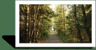 Test del bosque