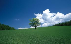tree clouds grass
