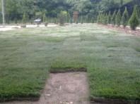formowanie trawnika 4