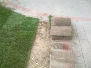 formowanie trawnika 8