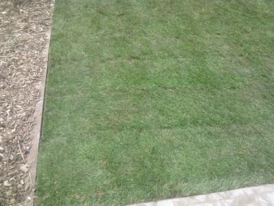 gotowy trawnik