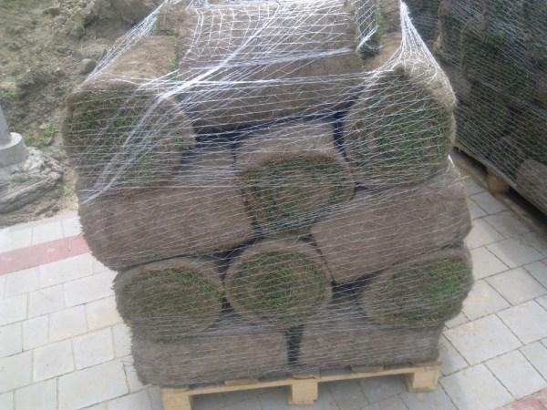 gotowy trawnik w rolkach