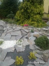 ogrody skalne z roślinami