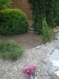 rośliny skalnego ogrodu