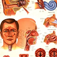 Throat Anatomy Diagram Ski Doo Snowmobile Parts Christianity Dr T 39s Food For Thought