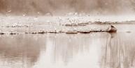 Atmosfere nebbiose - Brivio 3