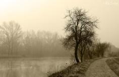 Atmosfere nebbiose - Brivio 8
