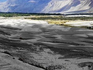 Sasnd Dunes, Nubra Valley, Ladakh, India