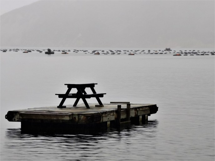 A picnic table on a swimming pontoon with a mussel farm amidst the misty hills