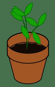 PlantTerracotta-800px
