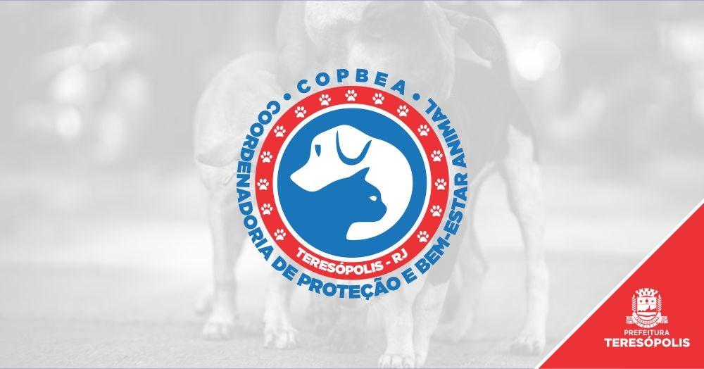Proteção e Bem-estar Animal: Prefeitura convida protetores para cadastro