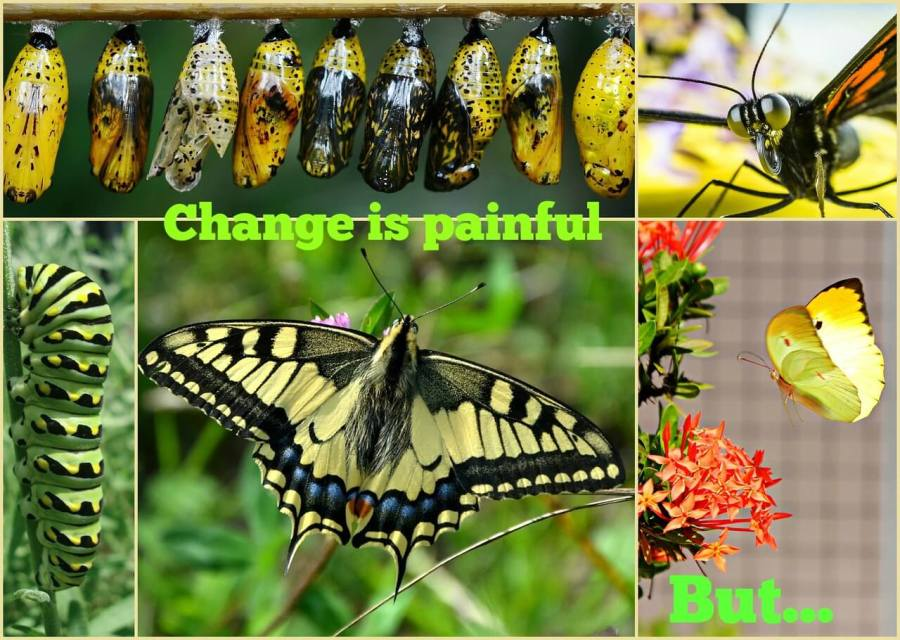 "photos of butterflies in various stages of development with the title ""Change is painful. But..."""