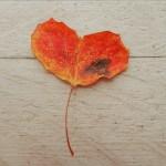sydan (5)