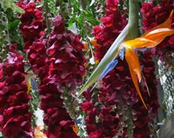 Temps de flors a Girona