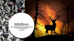 IATE Term of the week: Wildfire