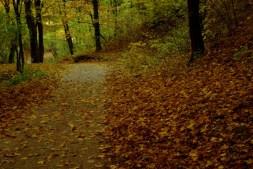 Őszi természetfotók - Bükkalja 2.