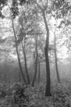 Kerecsendi-erdo-termeszetvedelmi-terulet-6