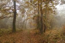 Kerecsendi-erdo-termeszetvedelmi-terulet-7