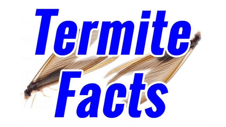 Facts About Termites - Like where to the different species live?