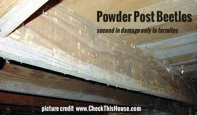 Crawl Space Powder Post Beetles Control