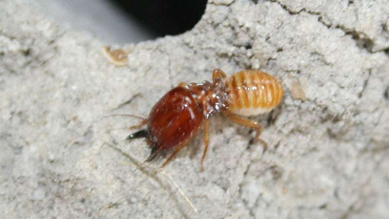 The Average Termite Tenting Cost