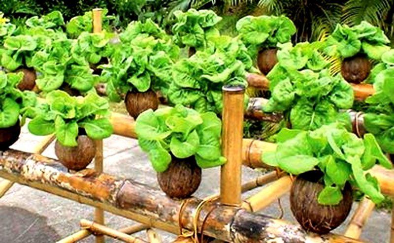 Agrobisnis