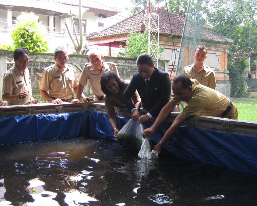 7 Cara Budidaya Ikan Lele di Kolam Tanah Khusus Pemula ...