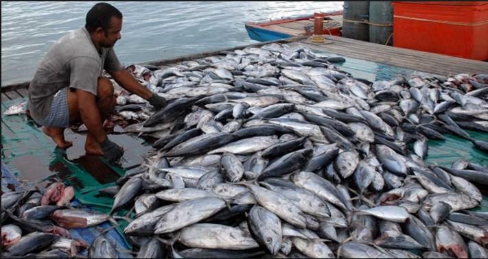 Penjualan ikan laut