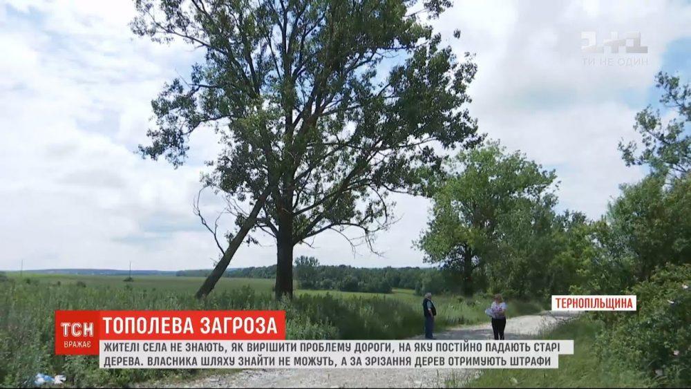 Небезпечний шлях: на дорогу у Тернопільській області постійно падають тополі (ВІДЕО)