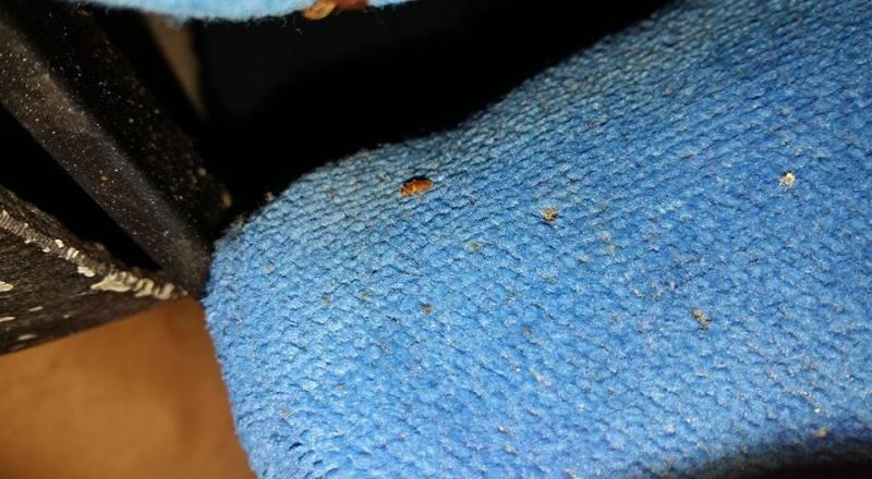 Kaki perempuan dipenuhi bekas gigitan usai bepergian naik bus (Faceboo/SoonTay)
