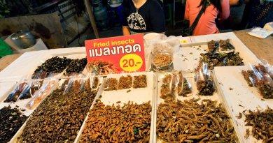 Serangga dijual Sebagai Makanan untuk solusi Krisis Pangan