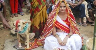 Gadis Berusia 18 tahun, Menikahi Anjing Liar Demi Mengangkat Kutukan