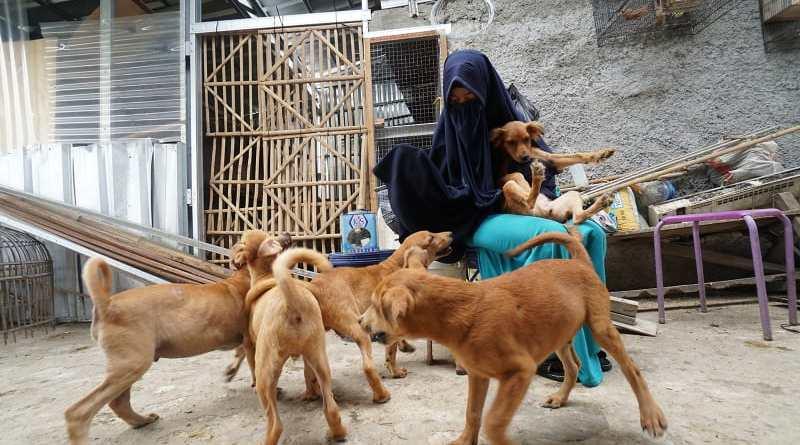 Hesti Perempuan Muslimah Bercadar Yang Merawat 11 Anjing