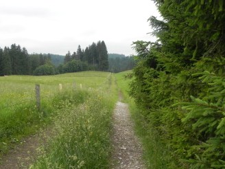 Weg am Waldrand / way at the forest