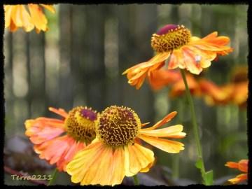 herbstliches Orange / autumnal orange