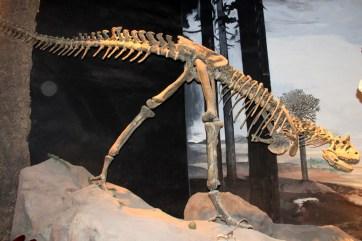 Dinossauro da Era Mesozoica