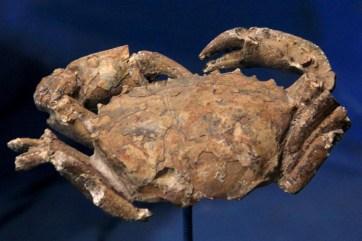 Fauna marítima da Era Cenozoica